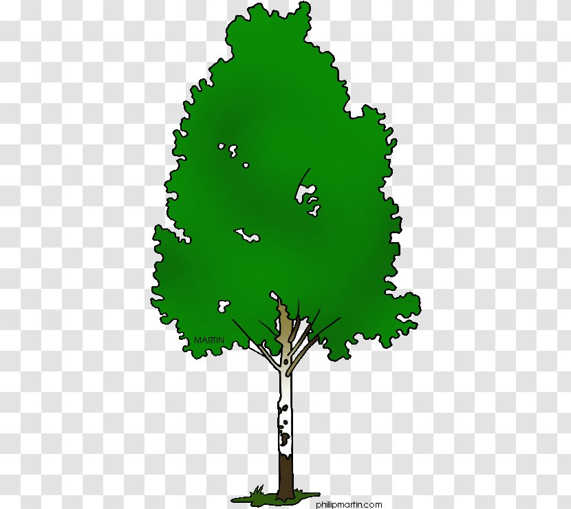 Paper Birch Silver Tree River Clip Art Texas State Pecan Transparent Png