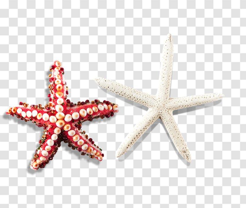 Starfish Icon - Pattern Transparent PNG