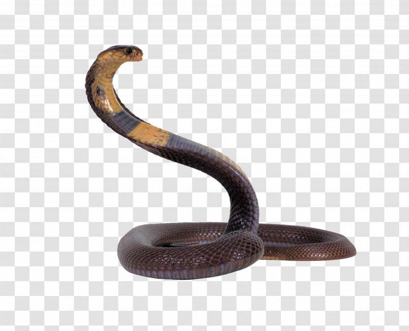Snake On Screen Prank - Online - Snakes 3D ReptileSnake Transparent PNG