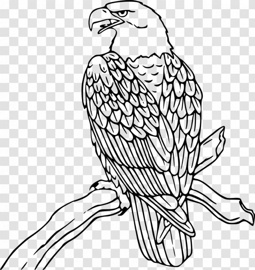 Bald Eagle Coloring Book Bird Public Identification Transparent Png