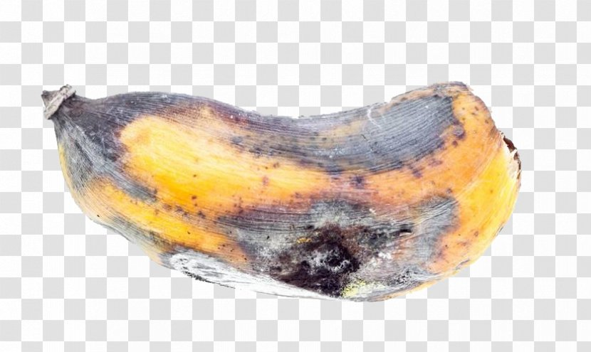 Banana Stock Photography Auglis Fruit Moldy Transparent Png