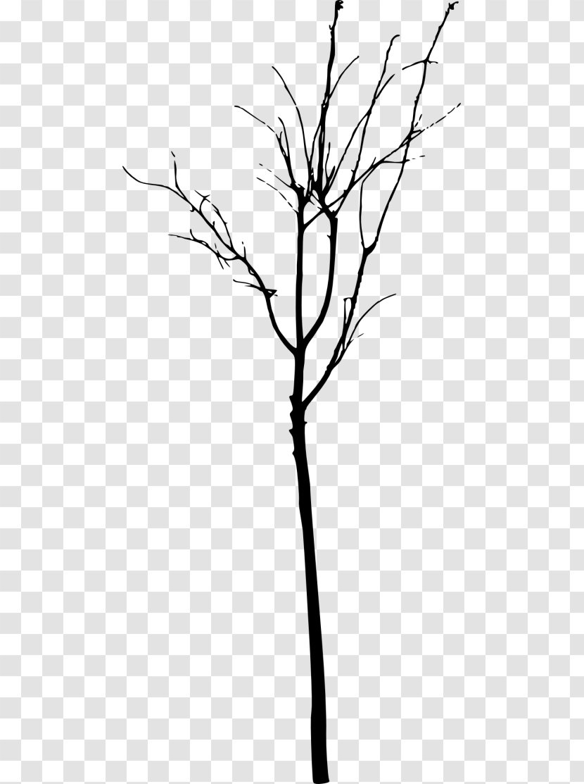 Twig Tree Branch Clip Art Drawing Transparent Png