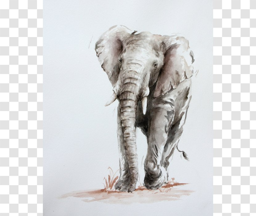 Indian Elephant African Drawing Wildlife Stock Photography India Transparent Png Our database contains over 16 million of free png images. pnghut com