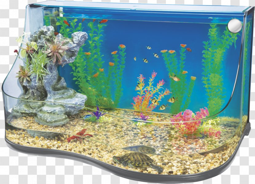 Aquarium Filters Nano Reef Aquascaping Aquatic Plant Multi Level Transparent Png Transparent Png