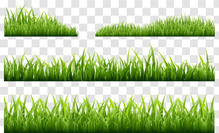 Photography Royalty-free Illustration - Green Grass Transparent PNG