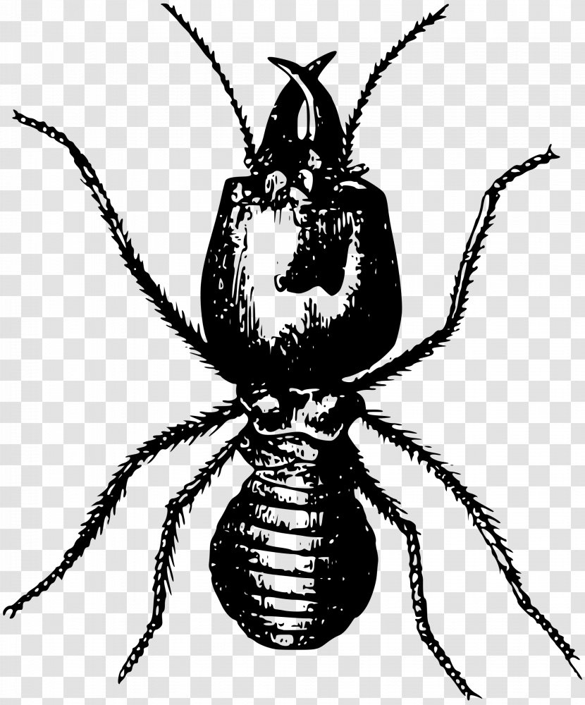 Ant Insect Termite Pest Control Transparent Png
