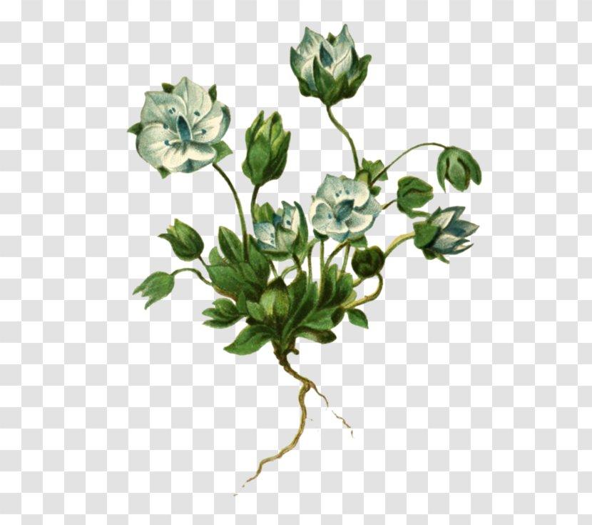 Flower Image Lomatogonium Design - Carinthiacum - Rosemary Hand Painted Transparent PNG