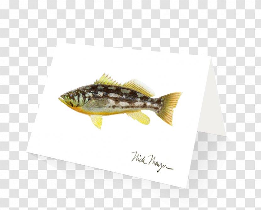 Fish - Design Transparent PNG