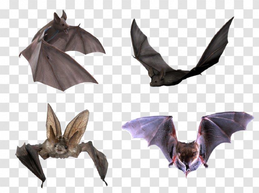 Flight Microbat Halloween - Bats Transparent PNG