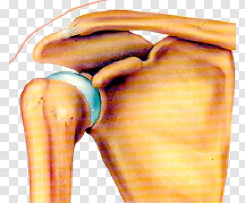 Joint Dislocation Shoulder Bone Arm Transparent PNG
