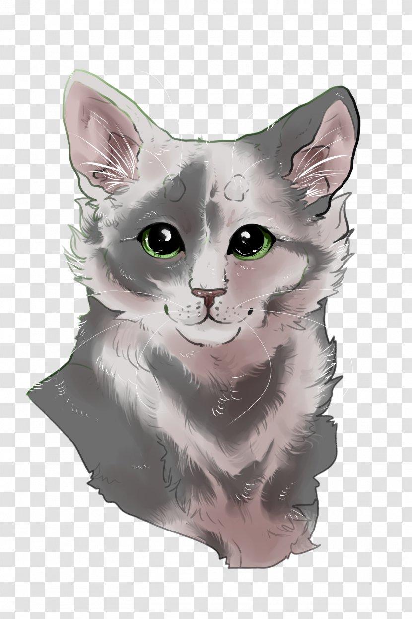 American Wirehair Korat Nebelung Whiskers Burmilla - Kitten Transparent PNG