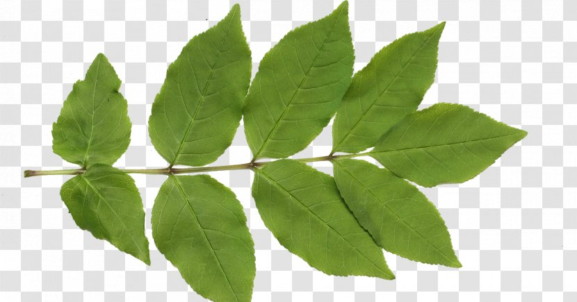 Texture Mapping Leaf Clip Art Plant Pattern Transparent Png