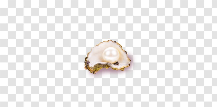 Seashell - White Pearl Shell Transparent PNG