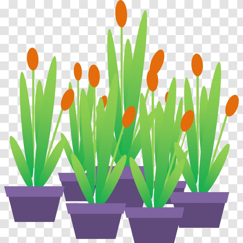 Animated Film Microsoft PowerPoint Tulip Ornamental Plant Transparent PNG