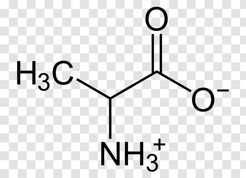 B Alanine Zwitterion Amino Acid Alanine Transaminase Diagram Transparent Png