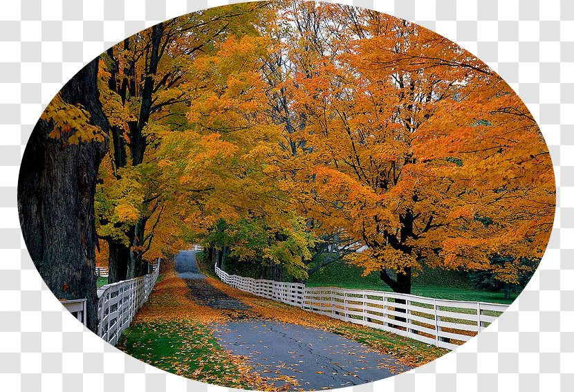 Desktop Wallpaper High Definition Television 1080p Computers 4k Resolution Tree Autumn Benefits Transparent Png