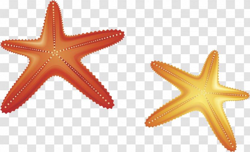 Starfish Euclidean Vector Computer File - Echinoderm - Material Transparent PNG