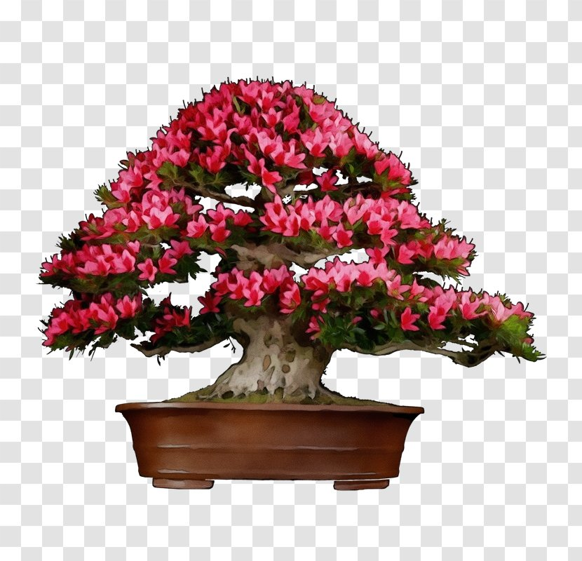 Bonsai Tree Perennial Plant Rhododendron Transparent Png