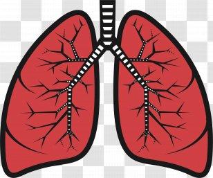 heart lung clipart - Clip Art Library