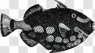 Download Clip Art Silhouette Dead Fish Transparent Png